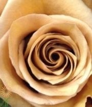 Gold Combo Roses