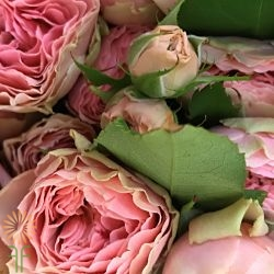 wholesale flowers | garden spray rose antique romantica