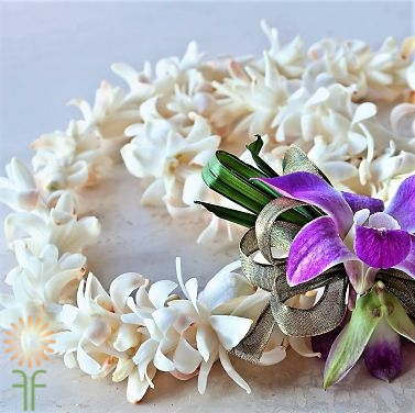 wholesale flowers | orchid- lei white