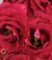 Red Lisianthus