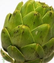 Green Artichoke Stem, Large