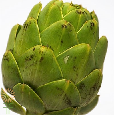 wholesale flowers | ARTICHOKE-