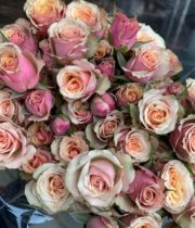 Pink Antigua Spray Roses