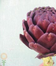 Chocolate Artichoke Stem, Large