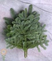 Greens, Noble Fir Tips 25lb Cse