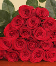 Red Check Mate Roses
