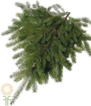 Greens, Douglas Fir 25lb Cse