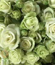 Green Glow Spray Roses