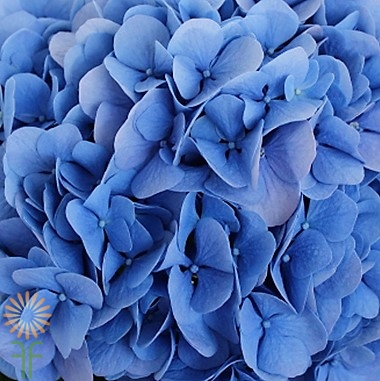 wholesale hydrangea-dark blue