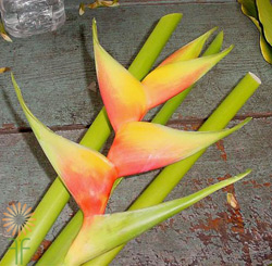 wholesale heliconia- deluxe orange