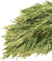 Greens, Incense Cedar 25lb Case