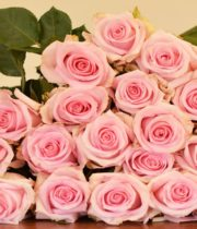 Light Pink Jessica Roses