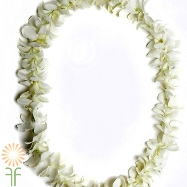 wholesale flowers | orchid- dendrobium garland