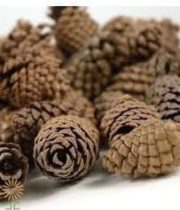 Lodgepole Pinecones, Mini (1,000 Pinecones)