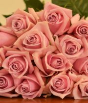 Light Pink Nautica Roses