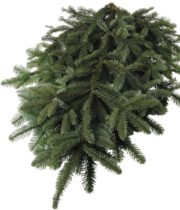 Greens, Noble Fir Tips 25lb Case