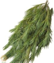 Greens, Princess Pine 25lb Case