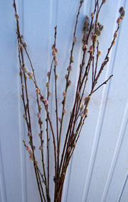 wholesale flowers | pussy willow whips