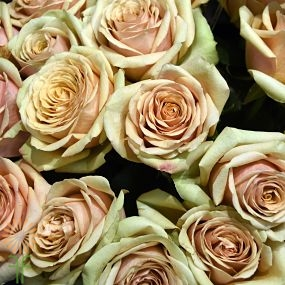 wholesale flowers | rose golden mustard