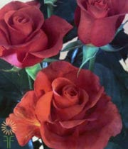 Brown Terracotta Roses