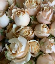 Peach Sahara Sensation Spray Roses