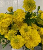 Yellow African Marigolds