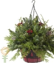 Yuletide Hanging Basket X4