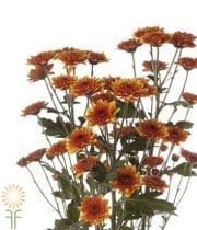 Mums, Spray-Cushion-bronze