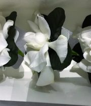 Gardenia Box, Medium (3 Blooms)
