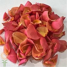 wholesale flowers | rose petals coral
