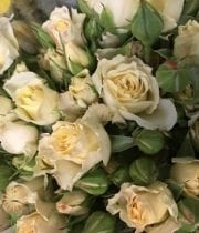 Creamy Bouquet Spray Roses