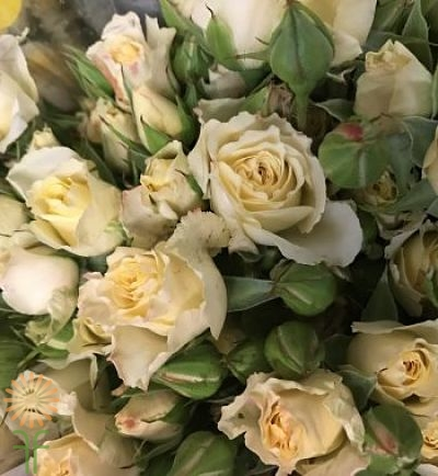cream-bouquet rose