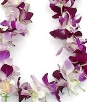 White And Purple Dendrobium Orchid Lei, Single