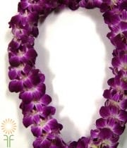 Orchid Lei, Dendro Double-white/purple