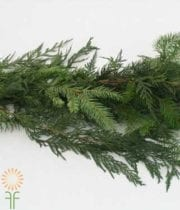 Garland, DougFir/Cedar Mx 50ft