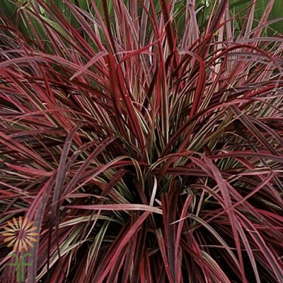 grass-red-fountain