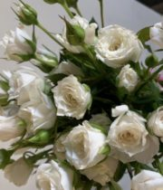 White Wendy Spray Roses