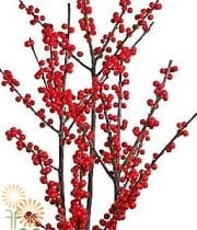 Wholesale-ilex-berry-red