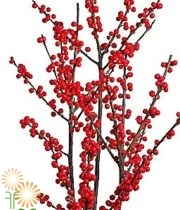 Red Ilex Berry, Medium