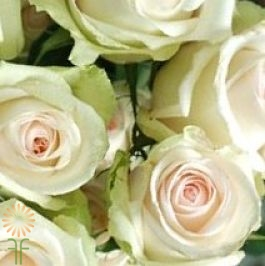 wholesale flowers | rose laperla