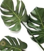 Monstera Leaves, Mini