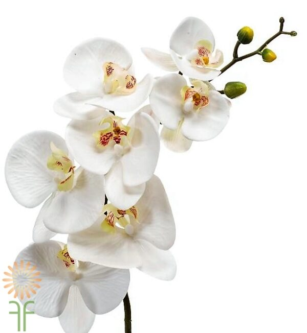 wholesale flowers | phalaenopsis orchid spray- white