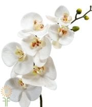White And Yellow Phalaenopsis Orchid Spray