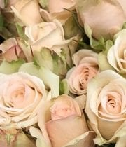 Peach Porcelina Spray Roses