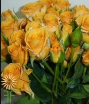 Orange Macarena Spray Roses