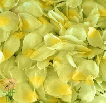 wholesale flowers | rose petals green