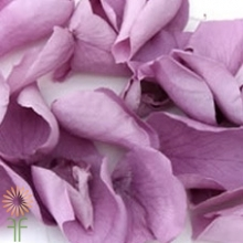 wholesale flowers | rose petals lavender