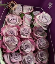 Purple Haze Roses