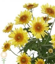 Yellow Novelty Sunflower Spray Mums