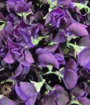 Purple Japanese Sweet Peas